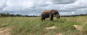 Wildparken Zuid-Afrika