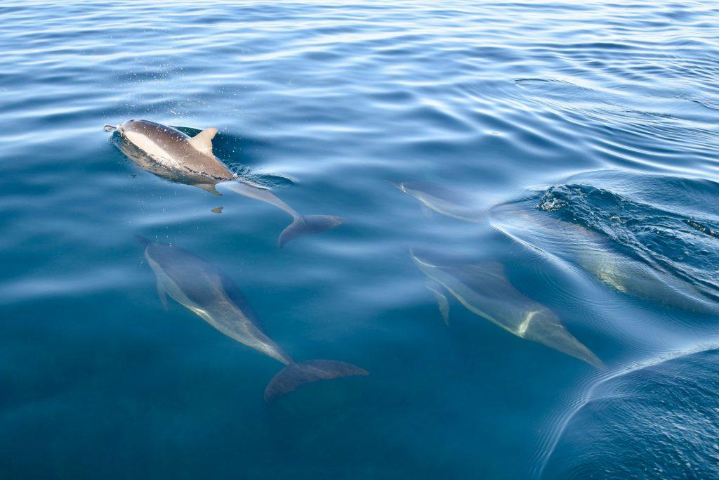 Dolfijnen Mauritius
